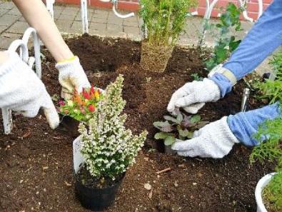 キッズもビギナーも とねりガーデニング・クラス「植物名プレート作りと花壇の植え替え」