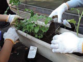 みんなの中庭プロジェクト 造園の技術を学ぶ