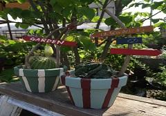 マイ植木鉢作りと植込みをしてみよう(2日制)